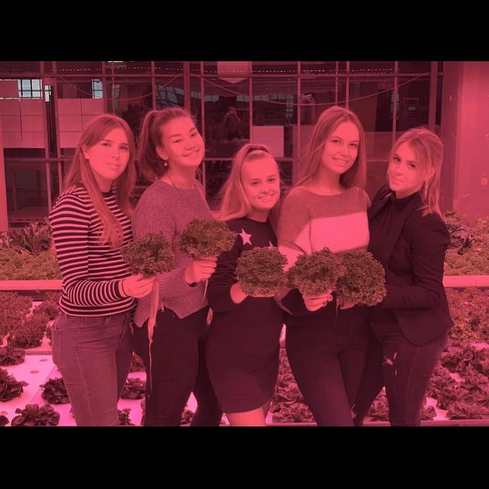 Vlnr: Helicon-leerlingen Romy Manders, Maud van Eert, Noah Sevens en Sanne Coolen in hun tijdelijke saladebar in het Veemgebouw.
