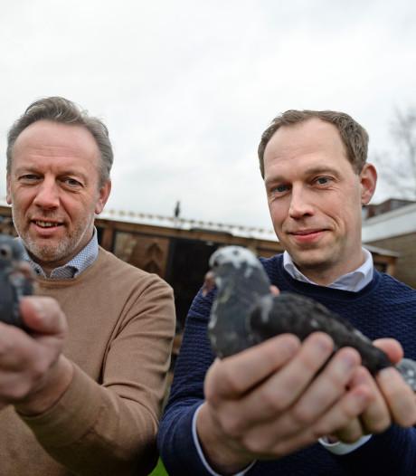 De Tour de France voor de duif: 1300 kilometer vanuit Barcelona naar Twente
