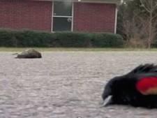 Pluie d'oiseaux morts sur une ville de l'Arkansas (vidéo)