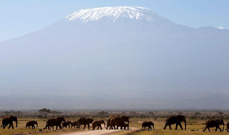 De Kilimanjaro in Tanzania. Beeld Reuters