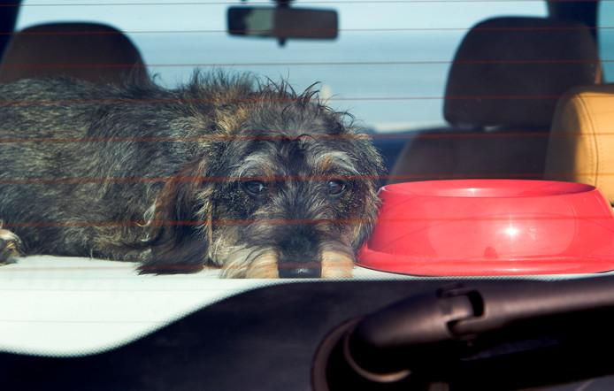 Een hond in een auto. Foto ter illustratie.
