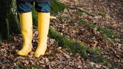 Zacht voor de tijd van het jaar, maar onstuimig en regenachtig