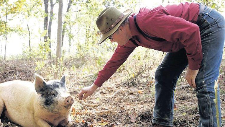 Joel Salatin boert op zijn Amerikaanse ranch 'met de natuur mee'. Beeld HH