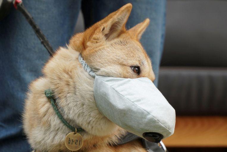 Hond Hari uit de Zuid-Koreaanse stad Incheon draagt een masker dat de lucht die hij inademt filtert.