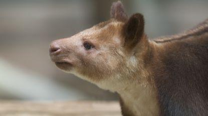 Duitse politie treft ongewone verzameling wilde dieren aan bij controle van voertuig