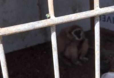 Twee apen gevonden in Best na klachten over stank, dieren nu spoorloos