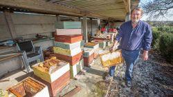 """Tienduizenden bijen verdwenen bij imker in Lombeek: """"Vermoedelijk door de mysterieuze verdwijnziekte"""""""