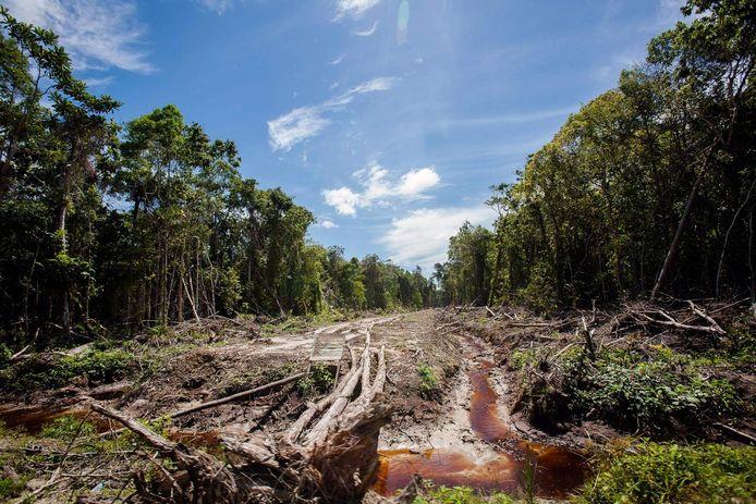 L'exploitation de la faune sauvage et la destruction de son habitat naturel sous-tendent les transferts de maladies, confrontant l'humanité au risque pour de maladies infectieuses émergentes. La photo ci-dessus montre une partie d'une forêt en Indonésie déboisée par l'industrie de l'huile de palme.