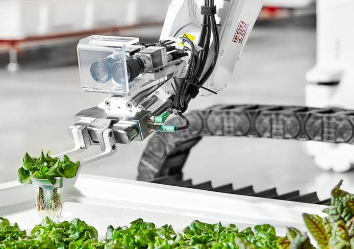 Loodzware robots doen in San Carlos met uiterste precisie hun werk.