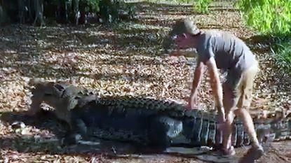 """""""Ik wéét dat het gevaarlijk was"""": Deense toerist waagt leven voor video op rug van 4,7 meter lange krokodil"""