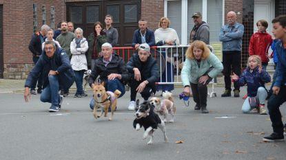Vijftigtal honden nemen deel aan ludieke hondenkoers