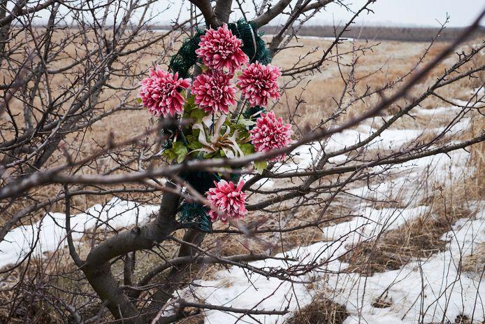 Door omwonenden geplaatste bloemen, in 2015 bij de bevroren crashsite van de MH17.