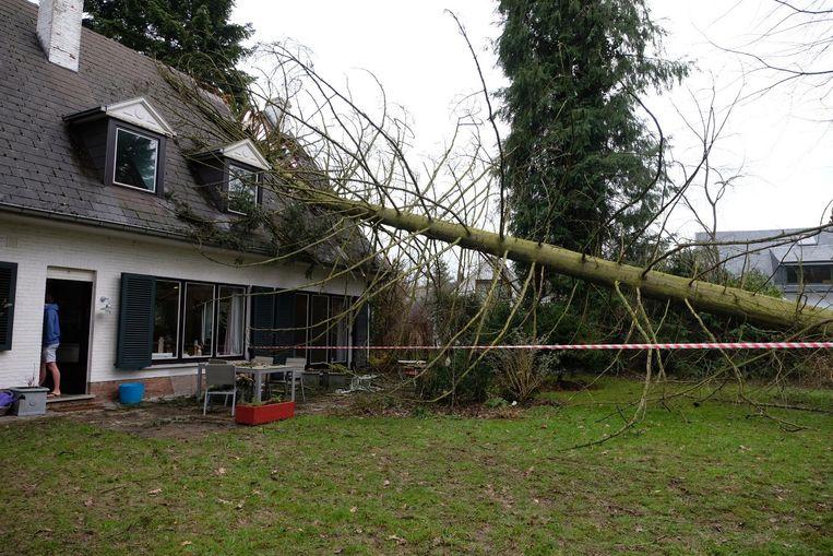In de Elzenlaan in Tervuren viel een grote boom de slaapkamer van een koppel in.