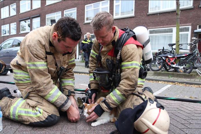 Bij een brand aan de Willem Buytewechstraat in oktober verleende de brandweer eerste hulp aan dieren die rook hadden ingeademd.