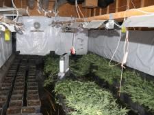 Flinke wietkwekerij ontdekt in Tholen, twee verdachten opgepakt