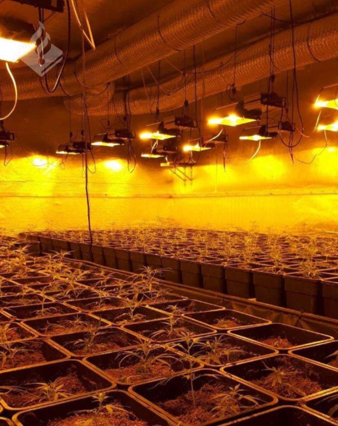Begin februari is er een grote wietplantage aangetroffen in een bedrijfspand in Emmeloord.