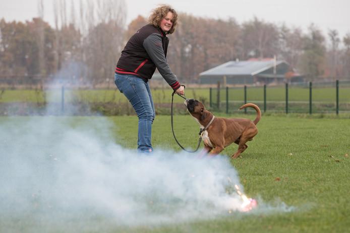 Kynoloog Rosa Wiggers: ,,Ga je voor de hond over zijn grens heen, is het mis. Heb je zo een paniekerige hond.''