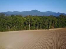 Activisten willen dat Ahold breekt met voedingsreus Cargill om ontbossing Amazone