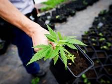 Kwekerij met 183 wietplanten gevonden in Sint Anthonis