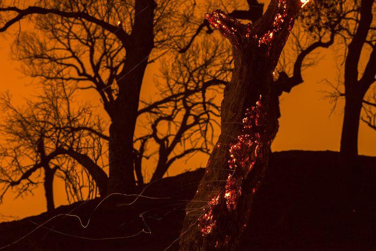 Hitte en droogte wakkeren de bosbranden in Californië aan.