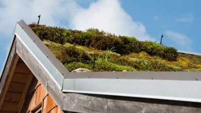 Geniet van een tuin vol leven… op je dak of balkon!