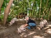 Reusachtig varken vertrekt uit Strijbeek, maar het biggenbos is wél een blijvertje