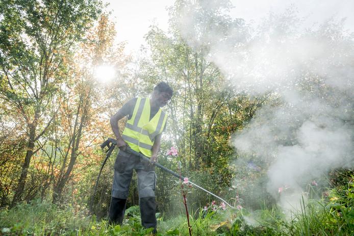 Gemeentelijke groenwerkers gaan schadelijke planten inspuiten met heet water.