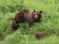 Nederlanders in de nesten op vakantie: gered met taxi van berg vol beren
