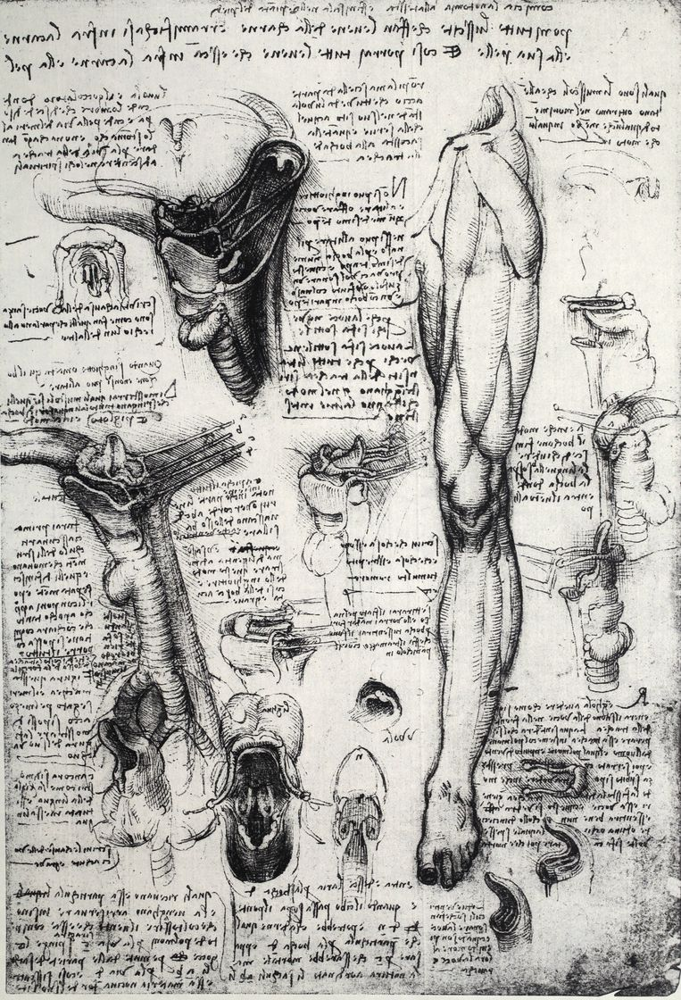 Kunst: Leonardo da Vinci. 'Zijn aantekenboeken beslaan 7.200 pagina's.' Beeld Getty Images