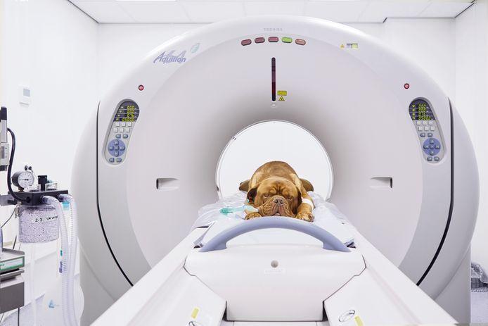 Het dierenziekenhuis krijgt onder meer een MRI-scanner voor huisdieren. Anders dan bij mensen krijgen dieren een volledige narcose voor de scan, waarbij de patiënt stil moet liggen.