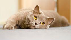 Dierenarts euthanaseert per ongeluk kat tijdens routinecontrole