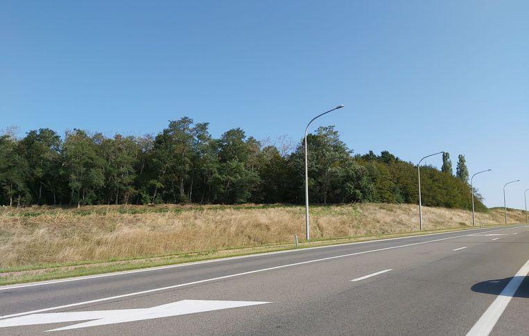 Het Geboortebos langs de invalsweg richting E40.