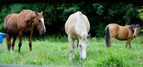 Meisje gewond na val van paard