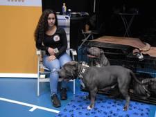 Kruising tussen Arnold Schwarzenegger en Fred Astaire is ideale hond bij OBKC-show