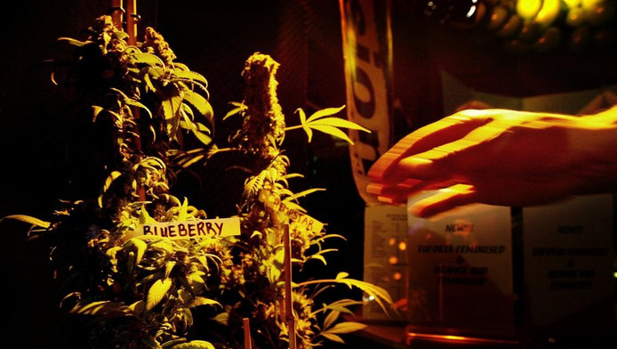 Archieffoto High Times Cannabis Cup © ANP