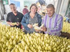 Eén van de grootste witlofverpakkers van Europa huist in Sint Philipsland