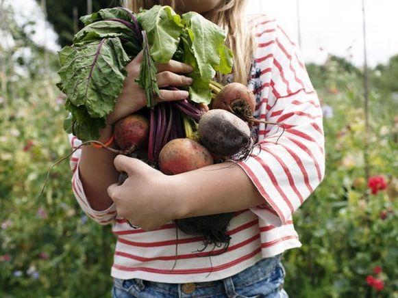 Moestuinieren is een rustgevende hobby, en je kan het hele jaar door genieten van je eigen fruit en groenten.