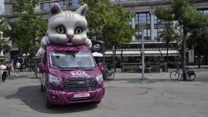 GAIA wil btw-verlaging voor verplichte kattensterilisatie