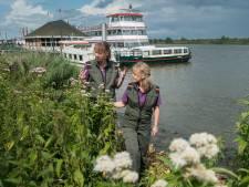 Druk van toerisme op de Biesbosch neemt toe