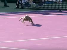 Leguaan zorgt voor hilariteit op Miami Open