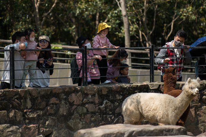 China laat de teugels los. De dierentuin van Sjanghai trekt weer volop bezoekers.