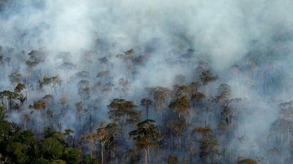 Ecosystemen zo groot als het Amazonewoud kunnen binnen tiental jaar volledig instorten