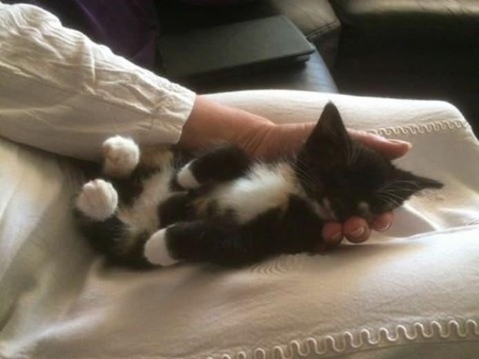 Een van de twee kittens die gevonden zijn in de vuilniswagen