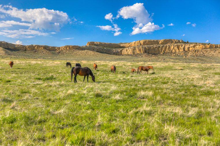 Naast de ranch is er ook gigantisch veel ruimte om, bijvoorbeeld, paarden te zetten.