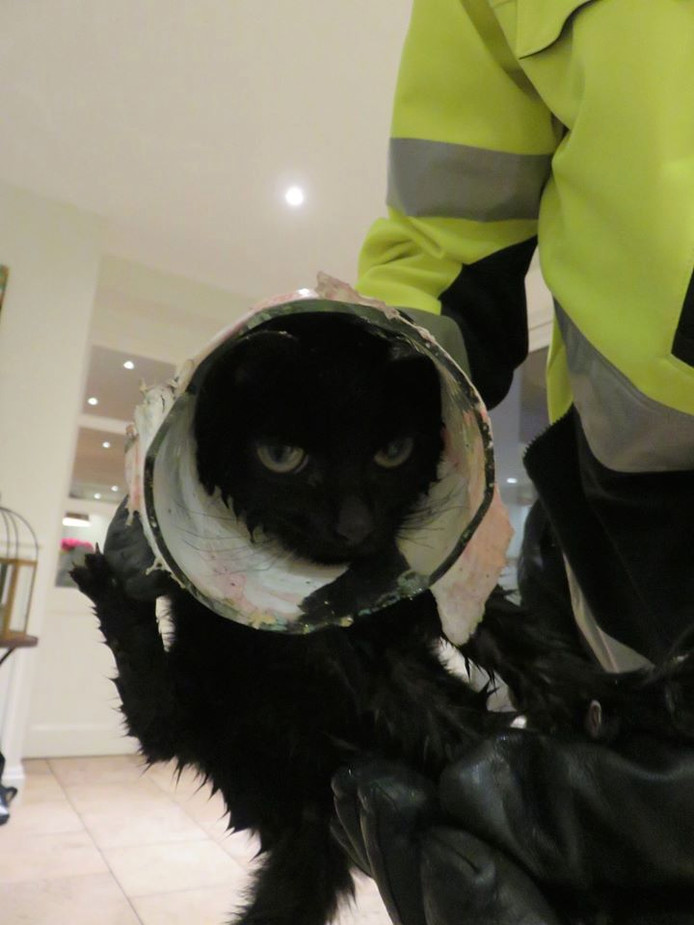 Kitten komt vast te zitten in glazen pot.