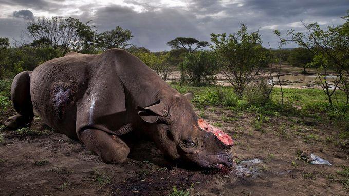 """""""Herinnering aan een soort"""": fotograaf wint prestigieuze prijs met schokkende foto"""