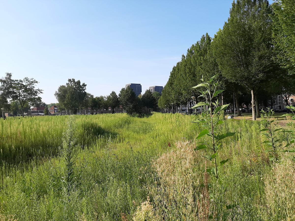 Stadsnatuur aan het Planciusplein in Breda.