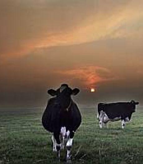 'Eigen koe eerst' in Gendt om Hollandse aanblik landschap te waarborgen