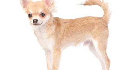 Nala en Max zijn populairste hondennamen