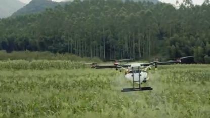 Spuitdrone besproeit gewassen met ongeziene precisie